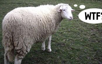 Kekovi pešekani pojeli farske ovčice